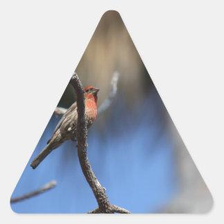 El pájaro pegatina triangular