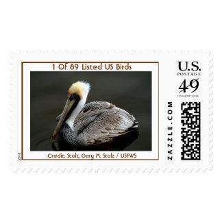 El pájaro puso en peligro el pelícano 1 0f 89 de B