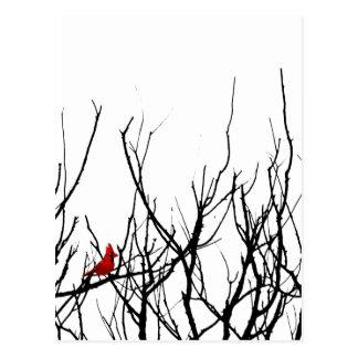 El pájaro rojo por las pimientas de Leslie Postal