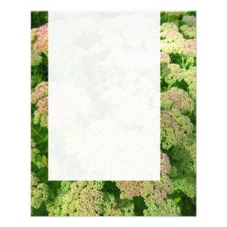 """El panel 0108 - Sedum """"alegría del otoño """" Folleto 4.5"""" X 5.6"""""""