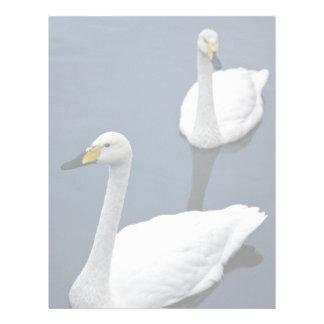 El par de cisnes de whooper, aves acuáticas de Pea Membretes Personalizados