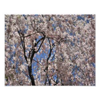 El paraguas de la primavera florece el estampado d arte fotográfico