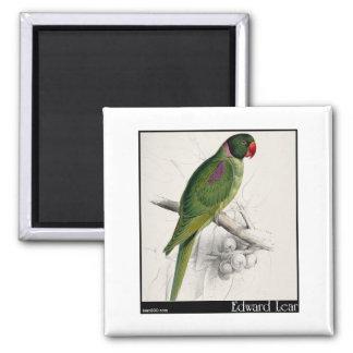 El Parakeet encapuchado de Edward Lear Imán De Frigorífico