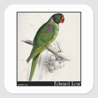 El Parakeet encapuchado de Edward Lear Pegatina Cuadrada