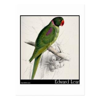 El Parakeet encapuchado de Edward Lear Postal