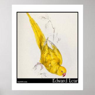 El Parakeet Rosa-Anillado de Edward Lear Poster