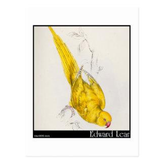 El Parakeet Rosa-Anillado de Edward Lear Tarjetas Postales