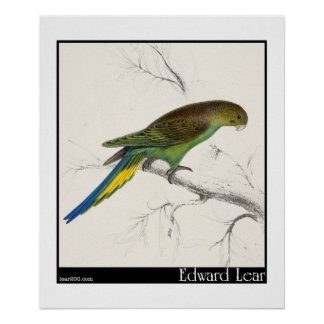 El Parakeet Undulated de Edward Lear Poster