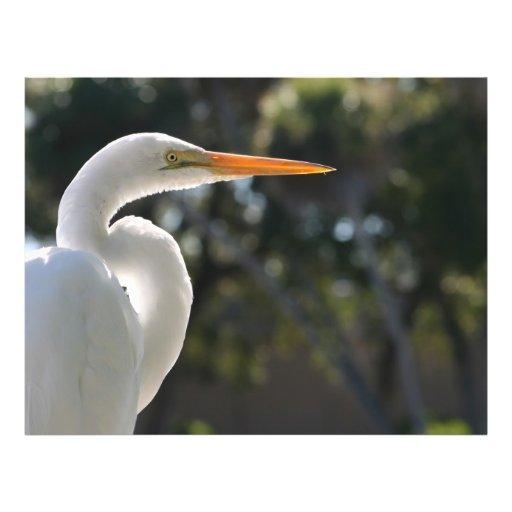 """El parecer hecho excursionismo Egret blanco derech Folleto 8.5"""" X 11"""""""