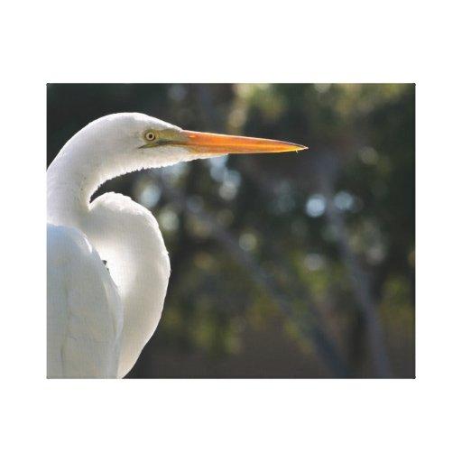 El parecer hecho excursionismo Egret blanco derech Impresión De Lienzo