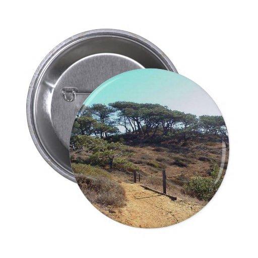 El parque de estado de los pinos de Torrey éstos Pins
