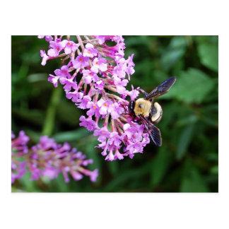 El parque zoológico de St. Louis manosea la abeja  Postal