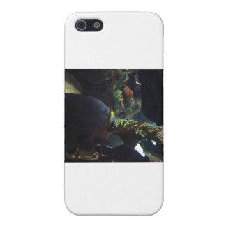 El paseo suavemente y lleva un pescado grande iPhone 5 cobertura
