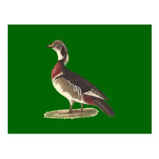 El pato de madera(sponsa de las anecdotarios) postales