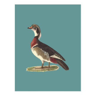 El pato de madera(sponsa de las anecdotarios) tarjetas postales