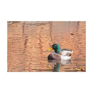 El pato del pato silvestre envolvió la impresión impresiones en lona estiradas