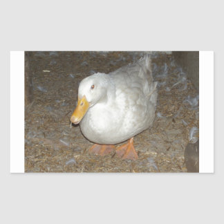El pato más freindliest en la tierra pegatina rectangular