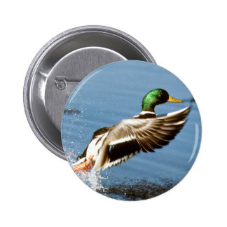 El pato silvestre Drake toma vuelo Pin Redondo 5 Cm