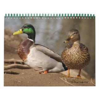 El pato silvestre Ducks el calendario