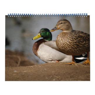 El pato silvestre Ducks el calendario de la foto