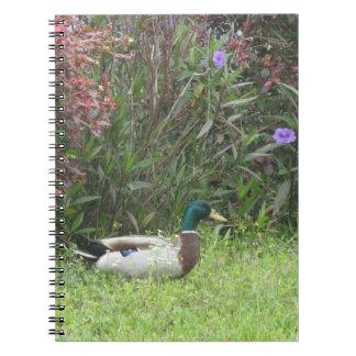 El pato silvestre masculino Ducks el cuaderno