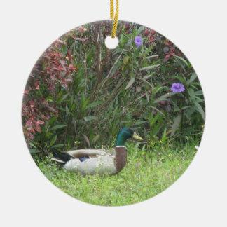 El pato silvestre masculino Ducks el ornamento Ornamentos De Reyes
