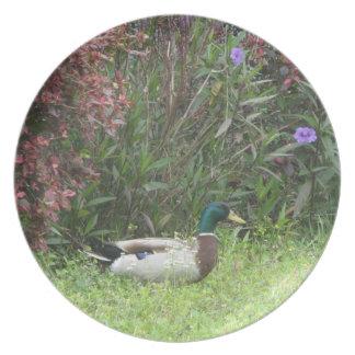 El pato silvestre masculino Ducks la placa Platos