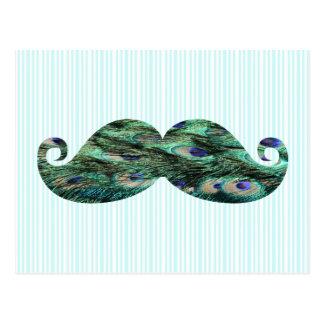 El pavo real colorido divertido empluma el bigote tarjetas postales