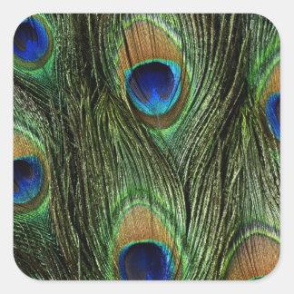 El pavo real colorido elegante empluma el DES de Calcomanía Cuadrada