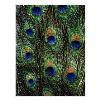 El pavo real colorido elegante empluma el DES de Postal