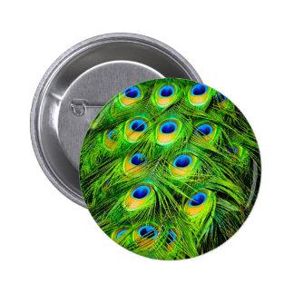 El pavo real colorido elegante empluma personaliza pin