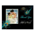 El pavo real de PixDezines agradece color de fondo Tarjetas Postales