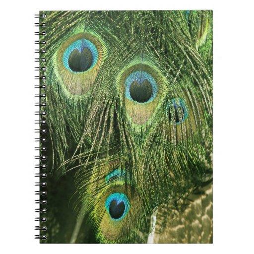 El pavo real/el Peafowl empluma el cuaderno