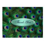 el pavo real elegante de la turquesa le agradece postales