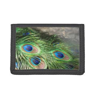 El pavo real empluma azulverde