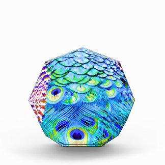 El pavo real empluma colores multi