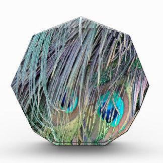 El pavo real empluma colores salvajes