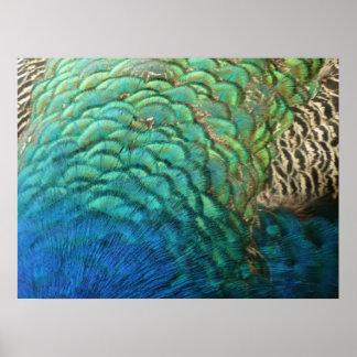 El pavo real empluma diseño abstracto colorido de póster
