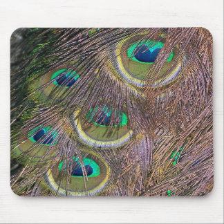 El pavo real empluma el animal MousePad de la faun Tapete De Ratón