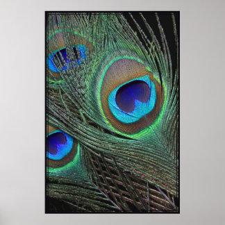 El pavo real empluma el poster vertical