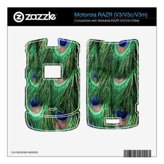 El pavo real empluma la piel de Motorola RAZR V3 Motorola RAZR Calcomanías