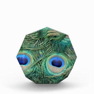 El pavo real empluma ojos grandes de color verde
