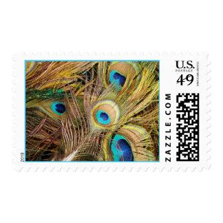 El pavo real empluma sellos