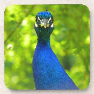 El pavo real le está mirando posavasos