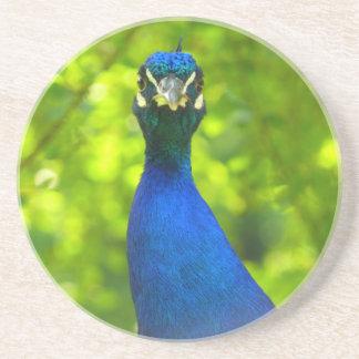El pavo real le está mirando posavasos de arenisca