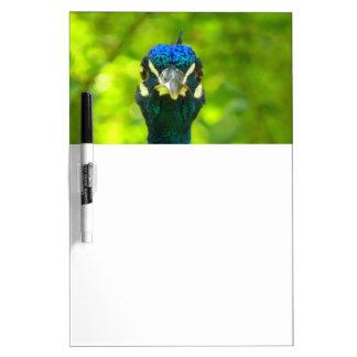 El pavo real le está mirando tablero blanco