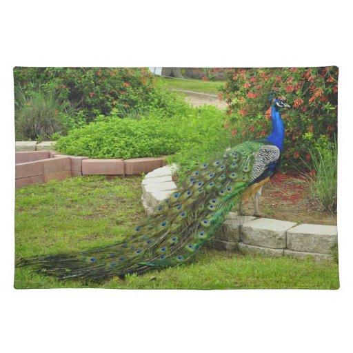 El pavo real precioso en el jardín Placemat Mantel Individual