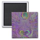 El pavo real púrpura empluma los imanes imán cuadrado