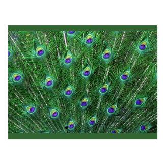 El pavo real verde empluma RSVP Postal