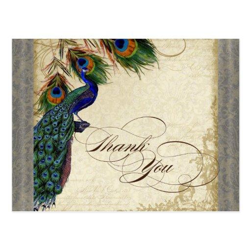 El pavo real y la pluma formales le agradecen postal
